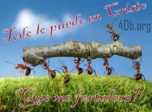 ants carry log