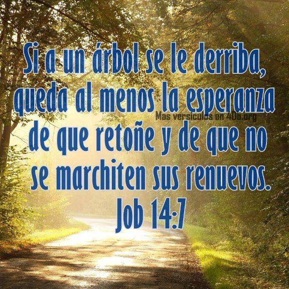 Dios Es Bueno Frases Y Reflexiones Job 147 Diosesbuenocom