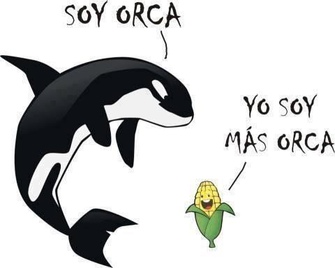 Soy orca, yo soy más orca