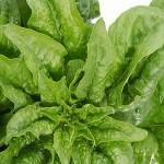 Diez alimentos que promueven el desarrollo de cálculos renales 8 150x150 10 alimentos que producen piedras en los riñones