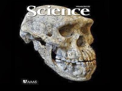 Descubren cráneo que podría cambiar la teoria sobre la evolución humana