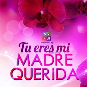 Tu Eres Mi Madre Querida