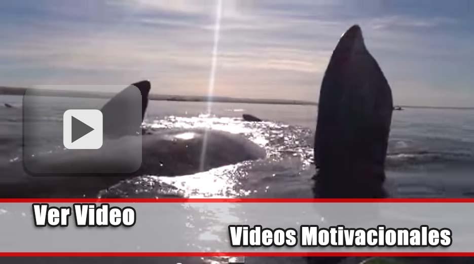 Increíble momento cuando una ballena levanta su kayak