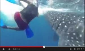 Casi se lo come el tiburon