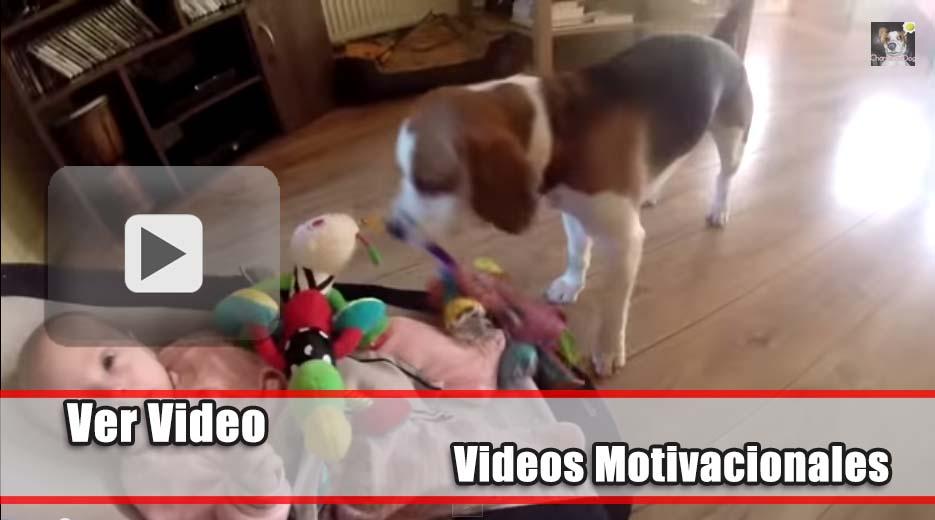Perro con culpabilidad trata de remediar su error, ¿puedes creerlo?