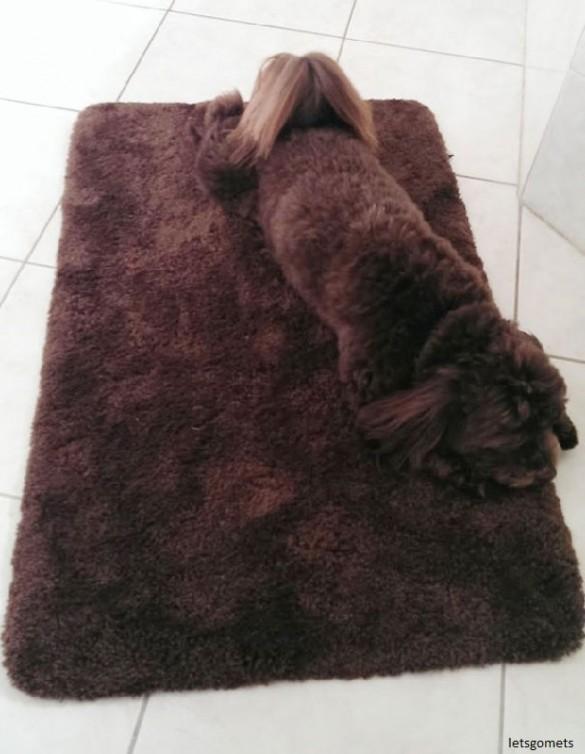 01 Perrito en el tapete de bano