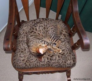 03 La silla con orejas de gato