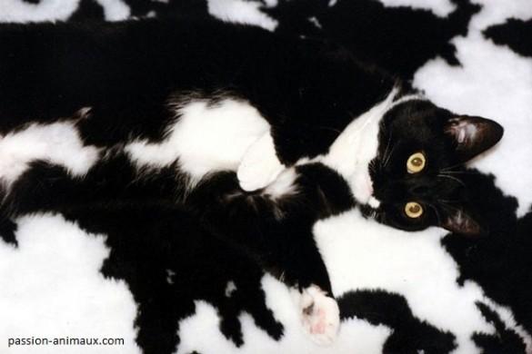 05 Si ves el gatito blanco y negro