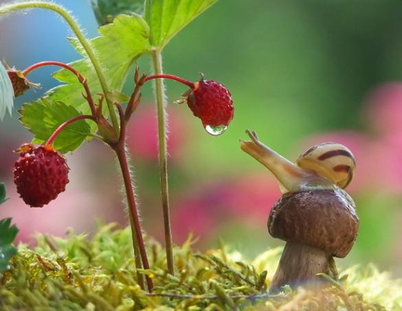 10 Caracol fresas y gota de lluvia Mishchenko