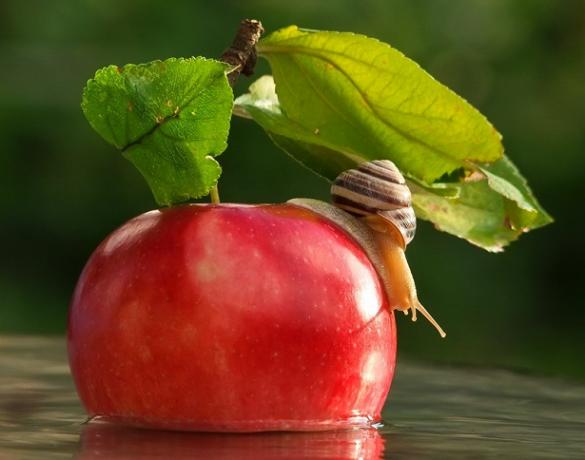 12 Caracol y manzana Mishchenko
