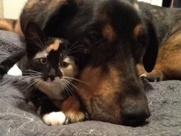 La reacción de éste gato por la muerte de su amigo perro te sorprenderá. 1