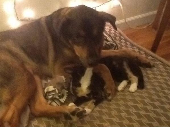 La reacción de éste gato por la muerte de su amigo perro te sorprenderá. 2