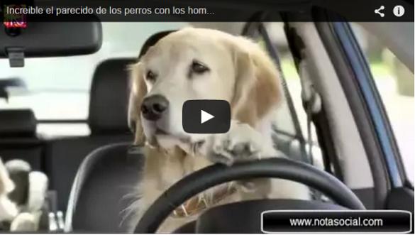 Increible el parecido de los perros con los hombres video