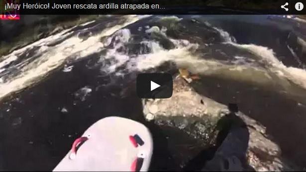 Joven Rescata Ardilla Atrapada en Medio de Un Río Rápido (Video)