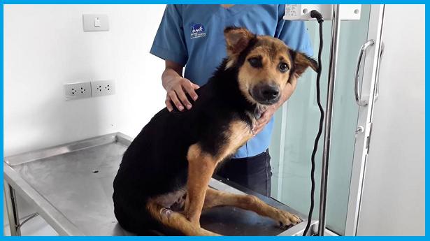 Modelo Consigue Un Perro Discapacitado: ¡Mira Lo Que Hizo Con Él!