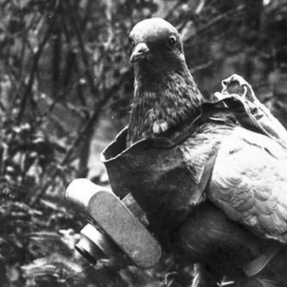 fotografia a blanco y negro paloma