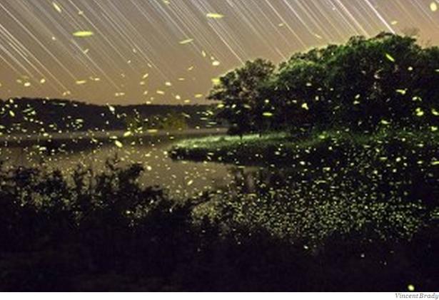 Espectaculares Fotografías Donde Se Capta La Magia De Las Luciérnagas, página 2