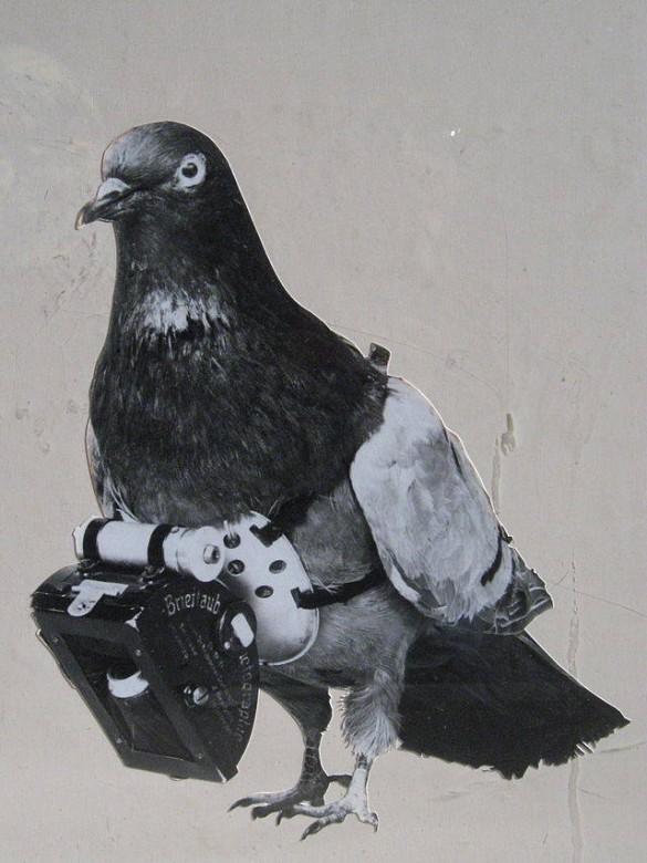 paloma con la camara en el cuello