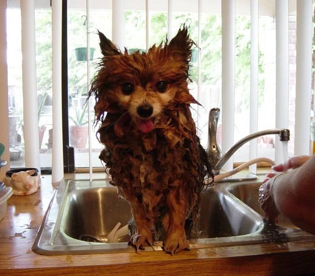 01 perro en el lavado