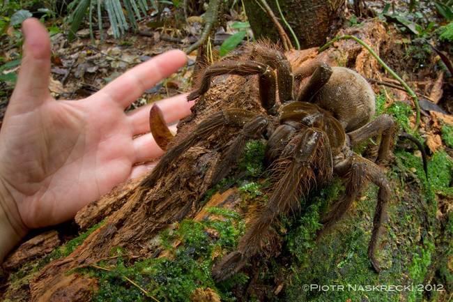 animales asombrosos reales descubiertos recientemente