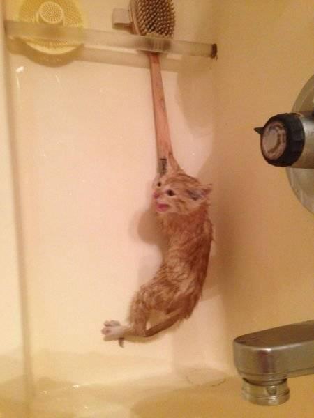 012 gato colgando