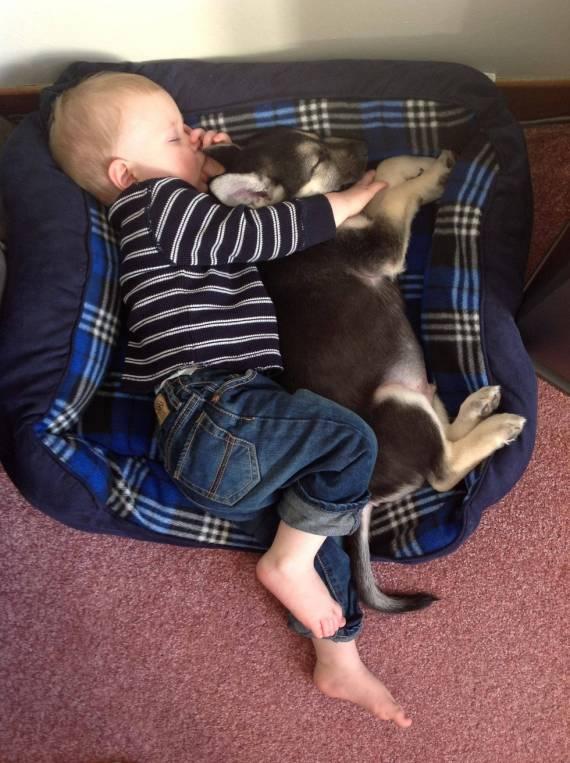 013 Bebes y sus mascotas, durmiendo la siesta