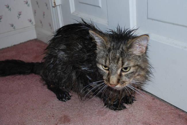 013 gato secandose