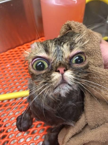 Mascotas que no les gusta bañarse