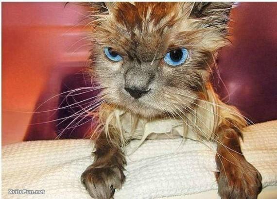 016 gato secandose