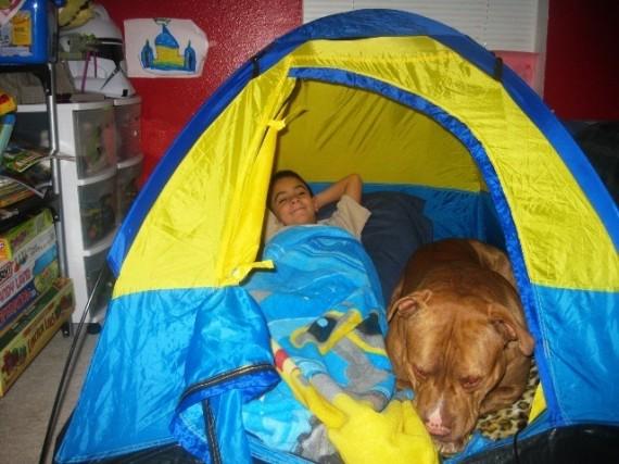 017 Bebes y sus mascotas, acampando