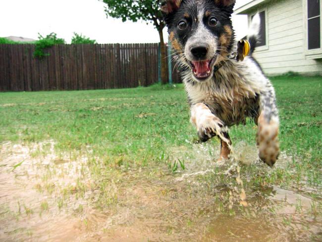 019 perro bajo la lluvia