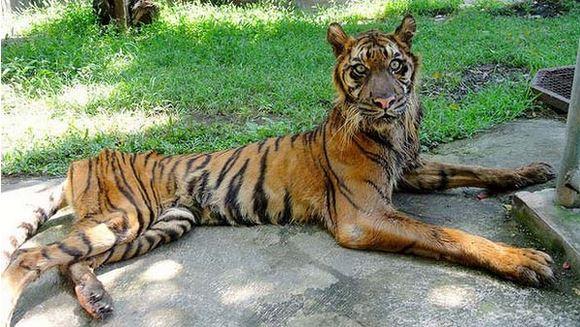 02 Zoo de la Muerte – Felinos con signos de desnutrición