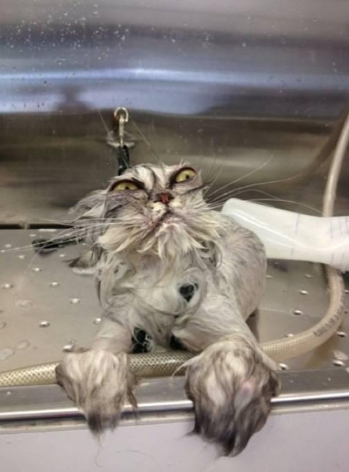 02 gato en el lavado