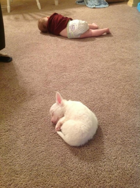 020 Bebes y sus mascotas, durmiendo en la alfombra