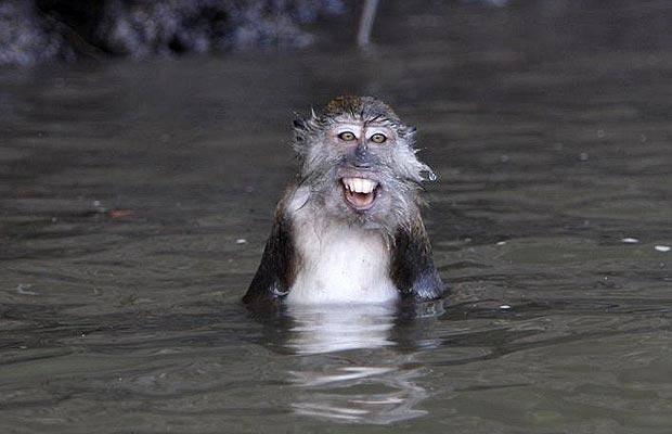 020 mono en lago