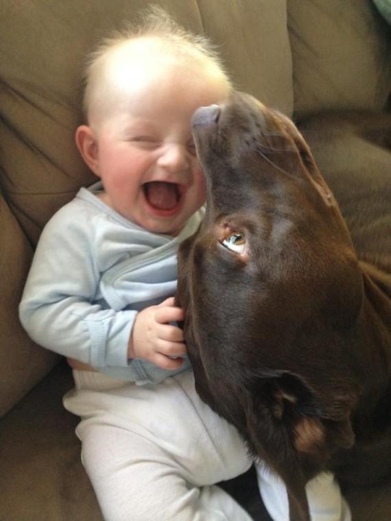 03 Bebes y sus mascotas, gran risa