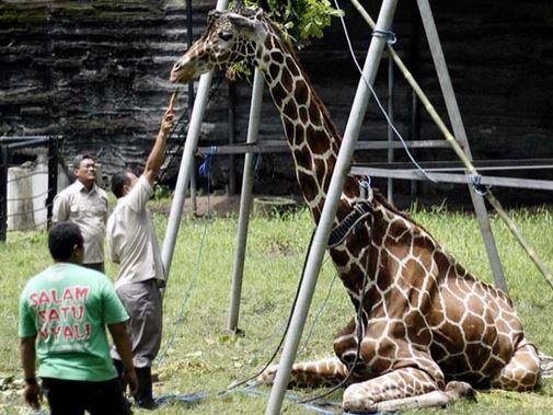 Averigua Por Qué A Este Zoológico Le Llaman