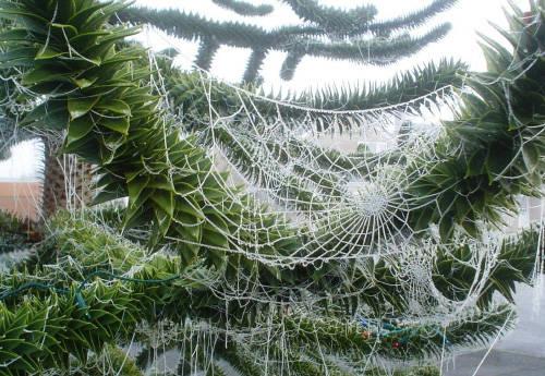 04 tela de araña