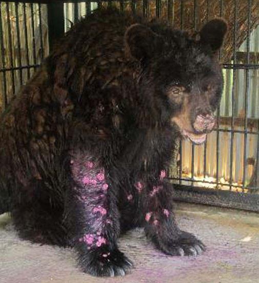 05 Zoo de la Muerte – Oso con problemas de salud