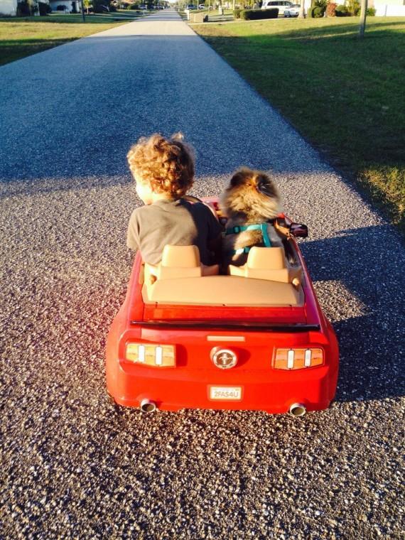 06 Bebes y sus mascotas, paseando en carro