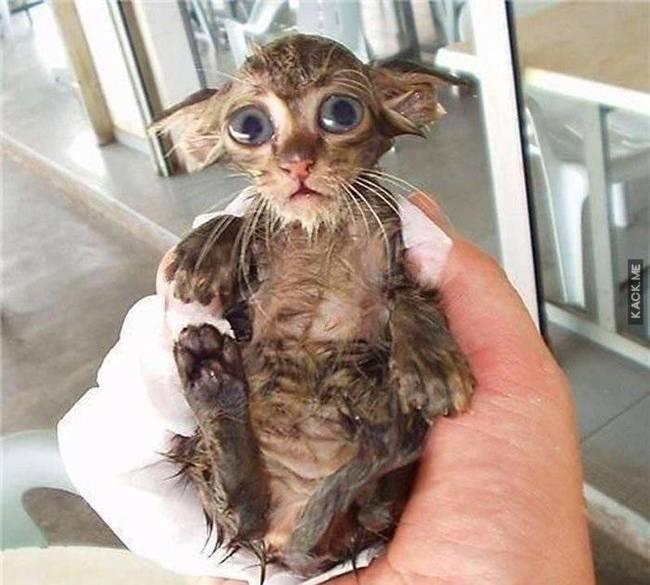 06 gatito pequeño luego de un baño