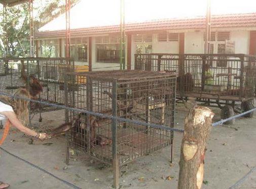 Zoo de la Muerte – Simios enjaulados.