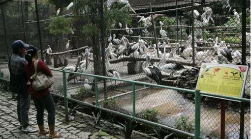 Zoo de la Muerte – Pelícanos