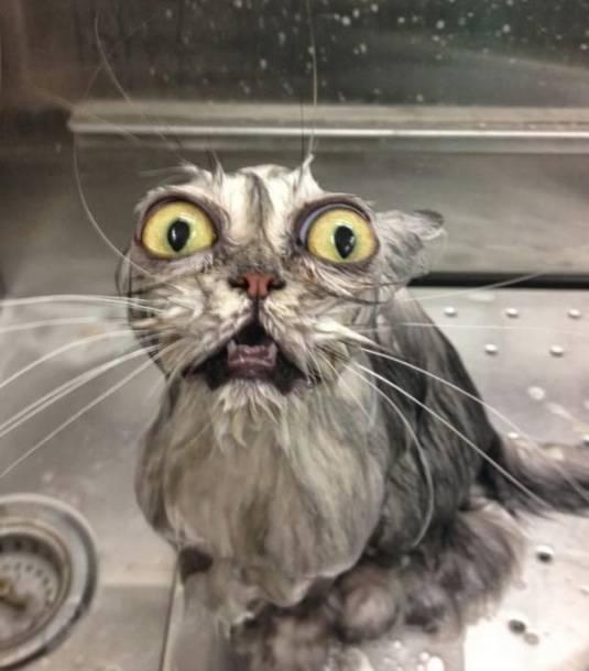 08 gato con grandes ojos