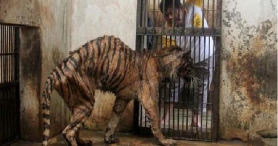 """Averigua Por Qué A Este Zoológico Le Llaman """"El Zoo De La Muerte"""""""