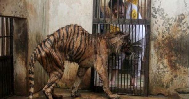 Averigua Por Qué A Este Zoológico Le Llaman «El Zoo De La Muerte»