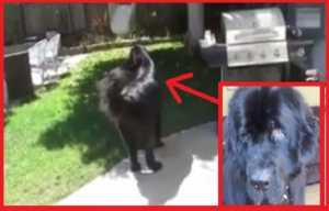 Un perro hermoso juega con su dueña a las escondidas