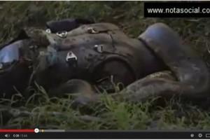 eaten alive tragado por anaconda