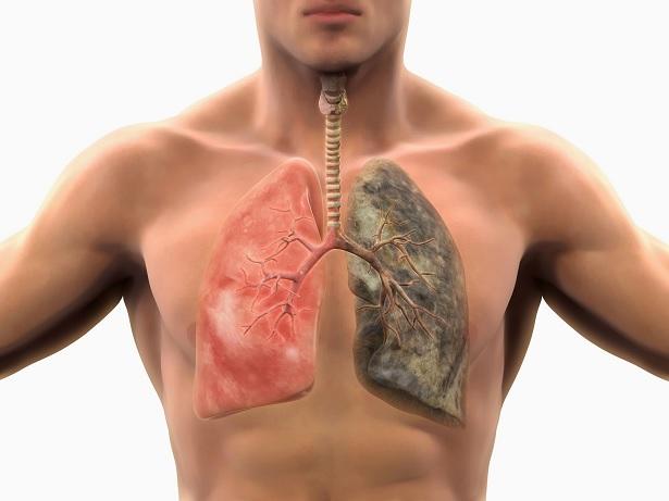 ¿Por qué el cigarrillo daña el corazón y los pulmones?