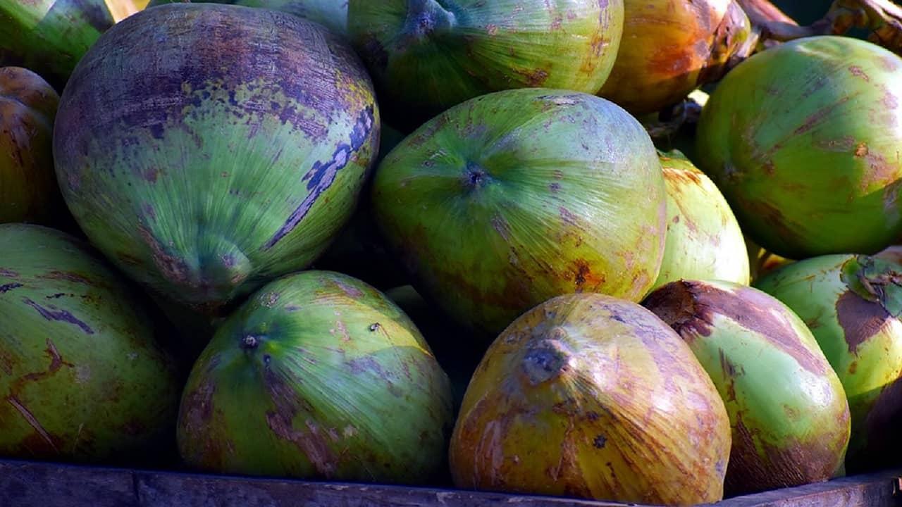 8 beneficios del aceite de coco para su cabello, piel, uñas y salud en general
